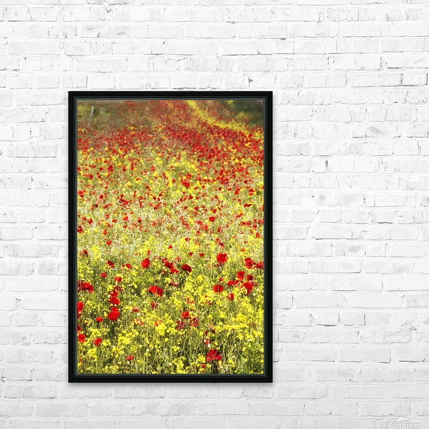 Abundance of red poppies in a field; Whitburn, Tyne and Wear, England HD Sublimation Metal print with Decorating Float Frame (BOX)