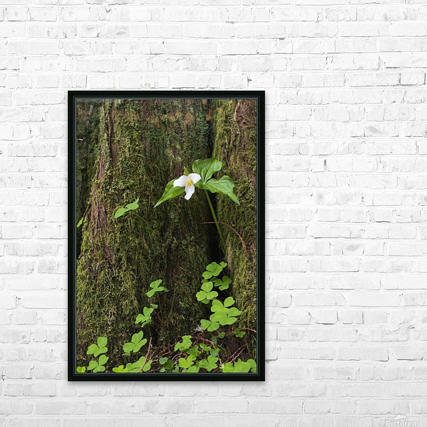 A Trillium grows from the trunk of a Western Red Cedar tree; Jewell, Oregon, United States of America HD Sublimation Metal print with Decorating Float Frame (BOX)