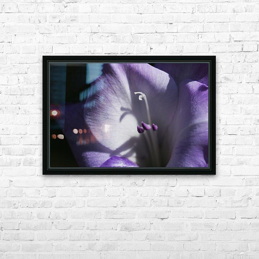 Purple gladiolus; Astoria, Oregon, United States of America HD Sublimation Metal print with Decorating Float Frame (BOX)