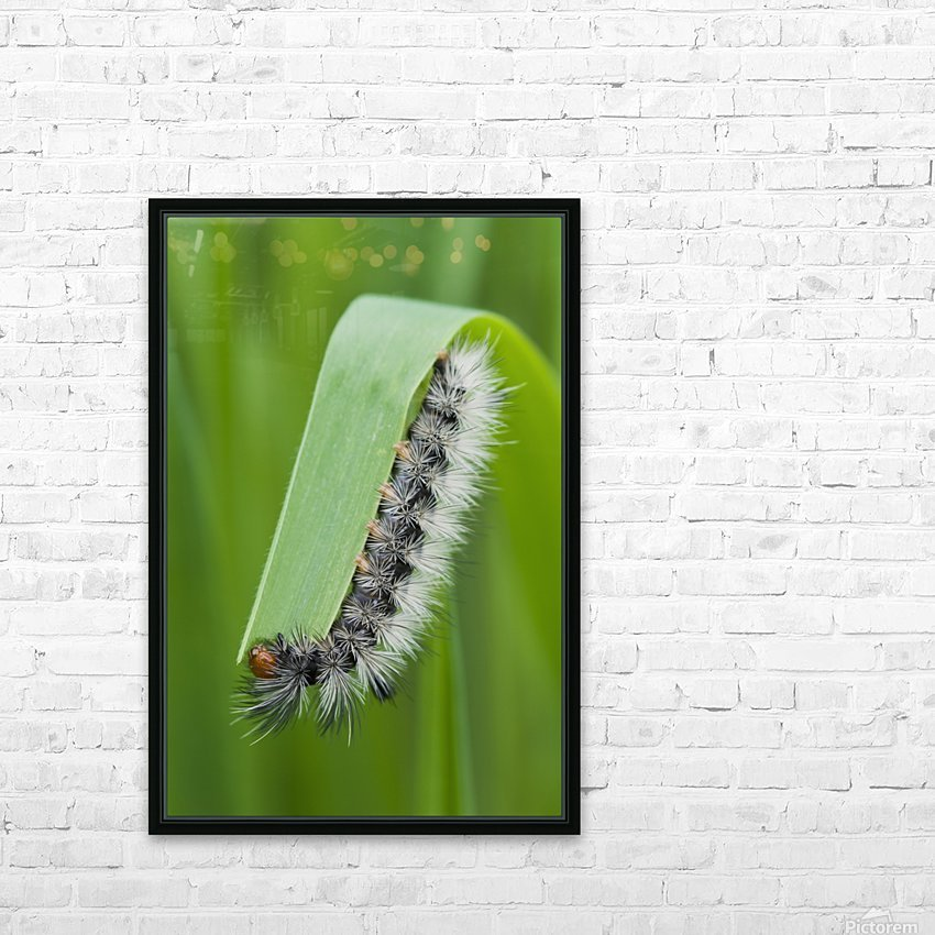A caterpillar eats grass; Astoria, Oregon, United States of America HD Sublimation Metal print with Decorating Float Frame (BOX)