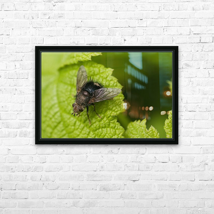 A fly rests on a leaf; Astoria, Oregon, United States of America HD Sublimation Metal print with Decorating Float Frame (BOX)