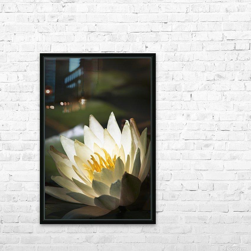 Water lily blooms in a pond; Astoria, Oregon, United States of America HD sublimation métal imprimé avec décoration flotteur cadre (boîte)