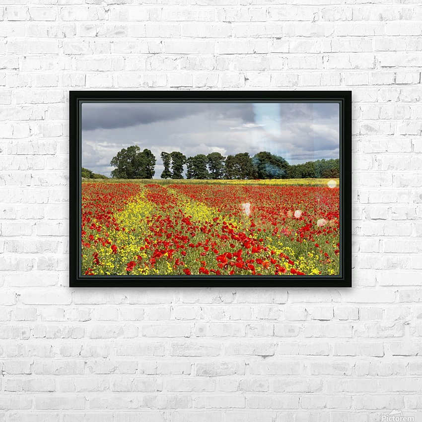 A field with an abundance of red and yellow flowers; Northumberland, England HD Sublimation Metal print with Decorating Float Frame (BOX)