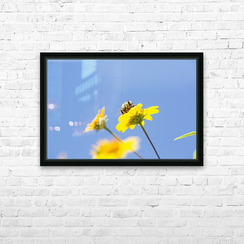 A bee is busy pollenating flowers as it goes about it's job collecting pollen; Bolivia HD Sublimation Metal print with Decorating Float Frame (BOX)
