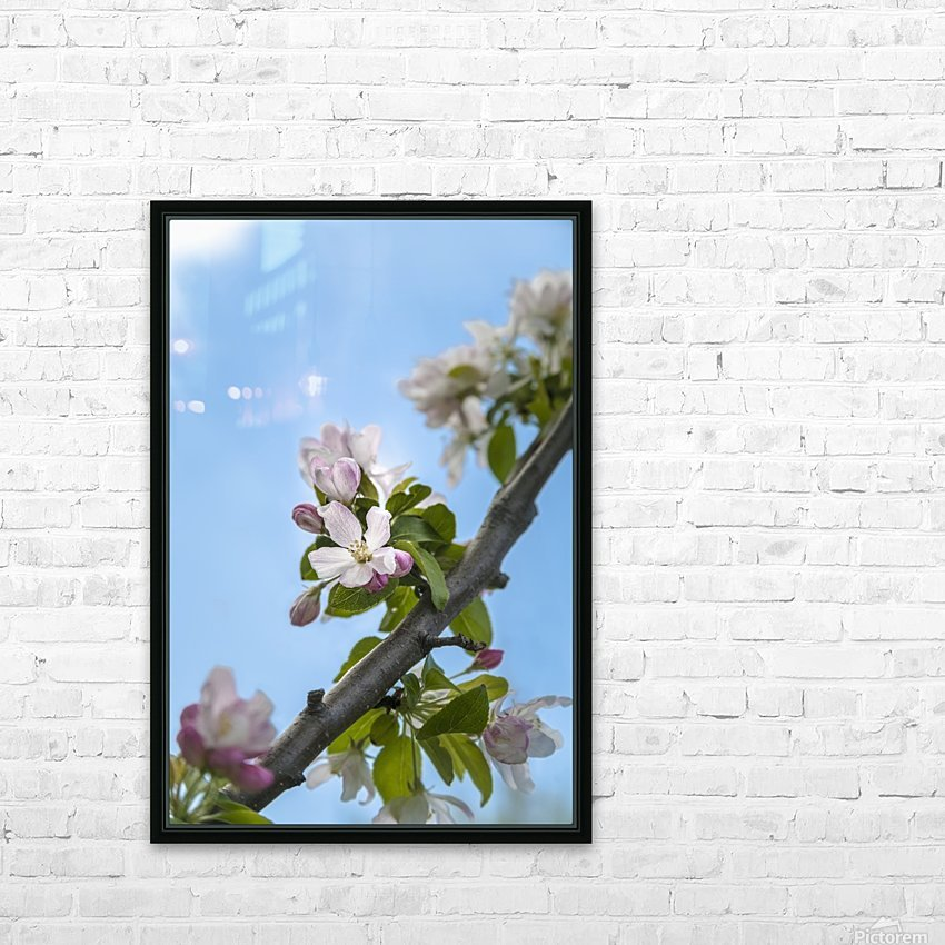 Pink and white crabapple flowers against a blue sky; Toronto, Ontario, Canada HD Sublimation Metal print with Decorating Float Frame (BOX)