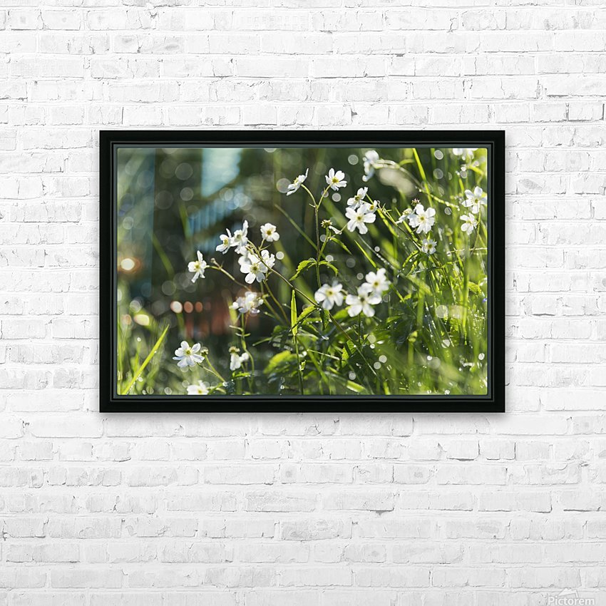 Buttercup (Ranunculus platanifolius); Black Forest, Germany HD Sublimation Metal print with Decorating Float Frame (BOX)
