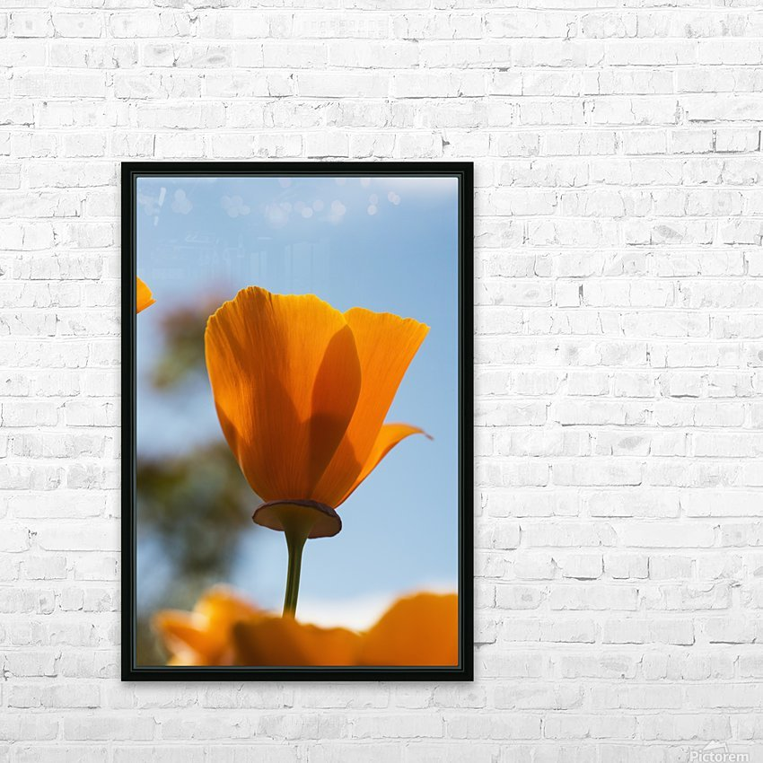 A california poppy (Eschscholzia californica) blooms in a garden against a blue sky; Astoria, Oregon, United States of America HD Sublimation Metal print with Decorating Float Frame (BOX)