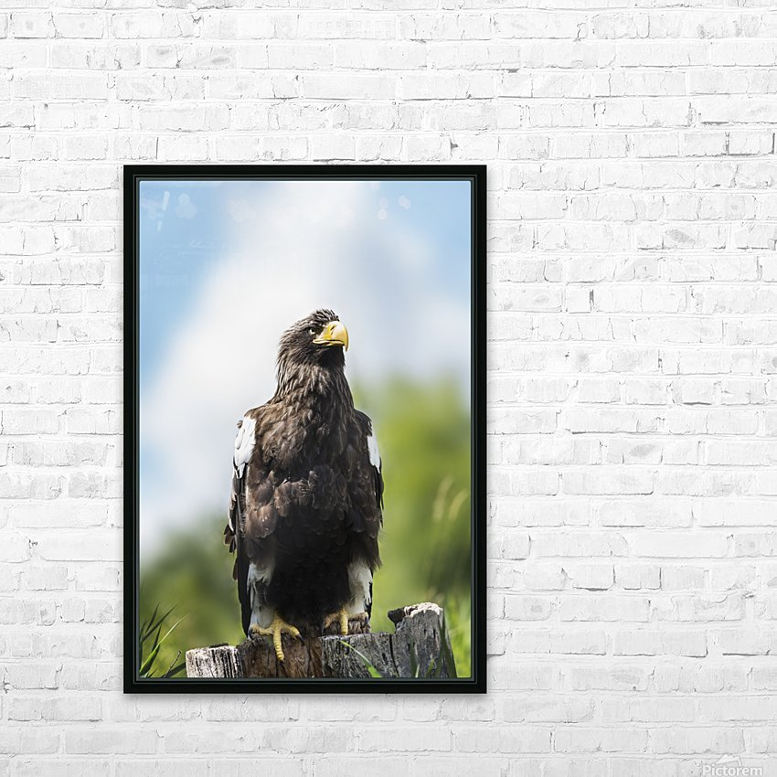 Golden Eagle, Assiniboine Park Zoo; Winnipeg, Manitoba, Canada HD Sublimation Metal print with Decorating Float Frame (BOX)