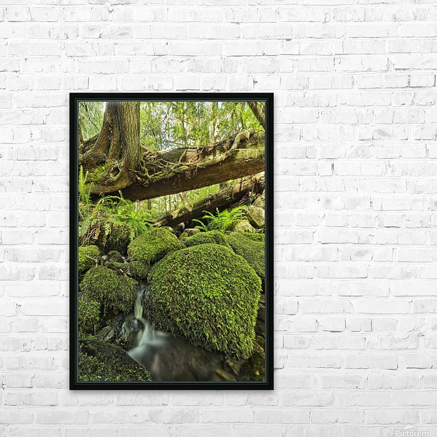 Rainforest in Avatar Grove near Tofino; British Columbia, Canada HD Sublimation Metal print with Decorating Float Frame (BOX)
