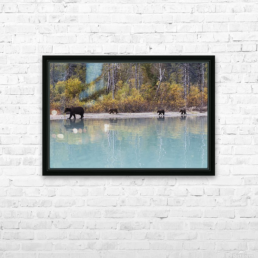 Sow Grizzly and three cubs walking along the shore of Crescent Lake, Lake Clark National Park, Southcentral Alaska, Autumn HD Sublimation Metal print with Decorating Float Frame (BOX)