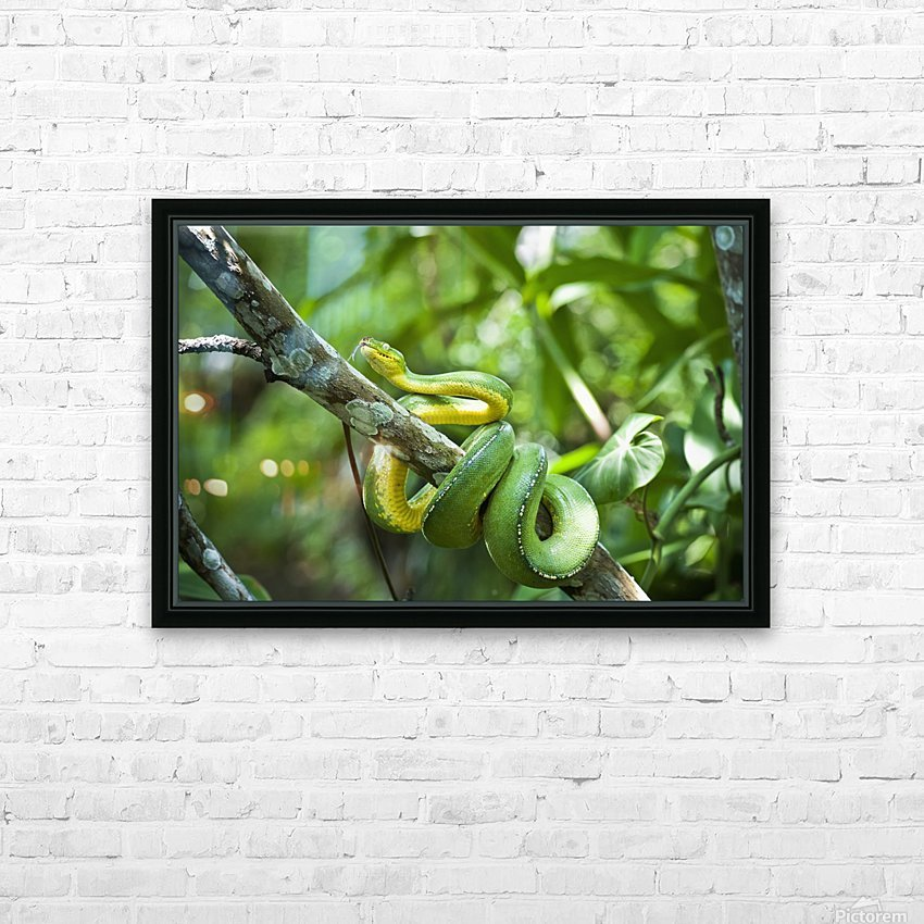 Green tree snake (Dendrelaphis punctulata); Madang Province, Papua New Guinea HD Sublimation Metal print with Decorating Float Frame (BOX)