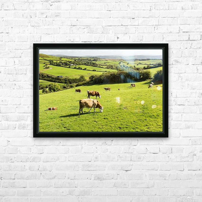 Cattle grazing on lush green hilly pastures with trees separating fields; County Kerry, Ireland HD Sublimation Metal print with Decorating Float Frame (BOX)