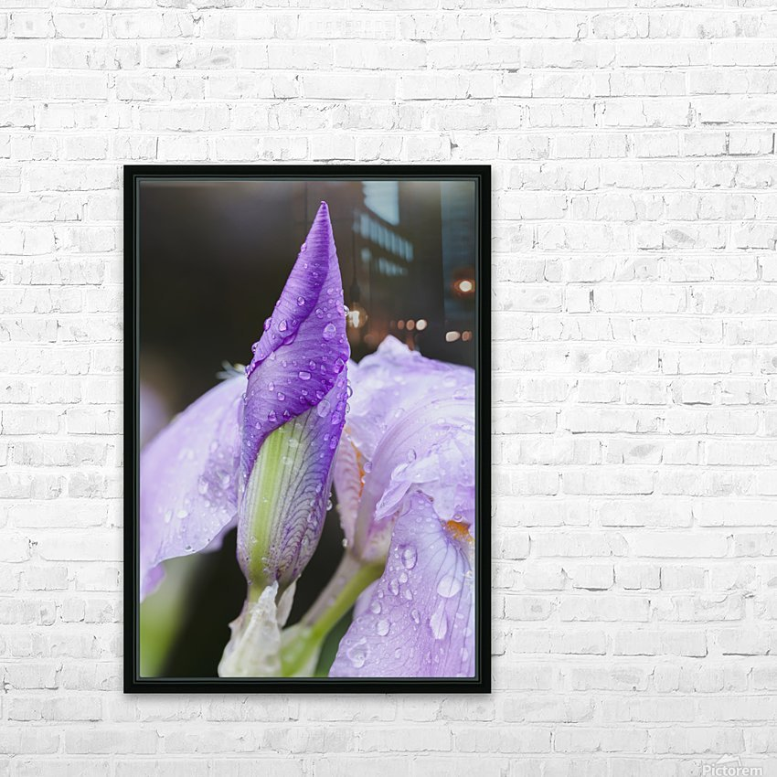 Close up of Iris; Quebec, Canada HD Sublimation Metal print with Decorating Float Frame (BOX)