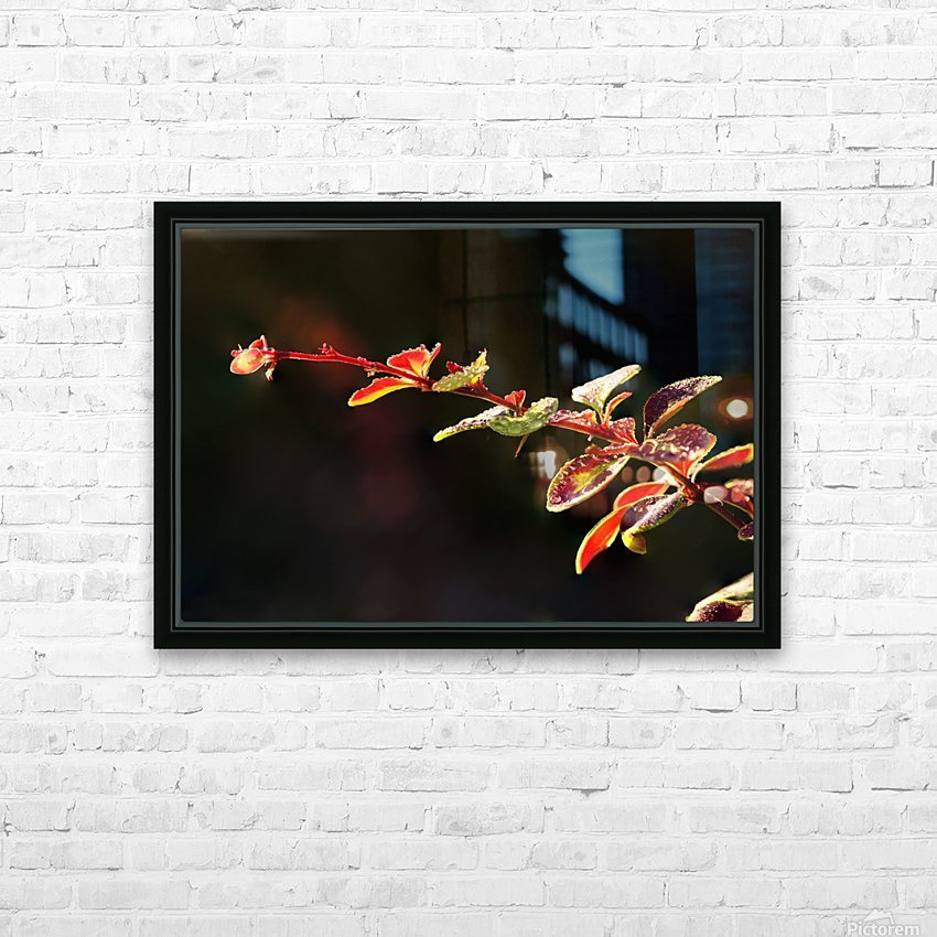 Close up of Berberis; Quebec, Canada HD Sublimation Metal print with Decorating Float Frame (BOX)