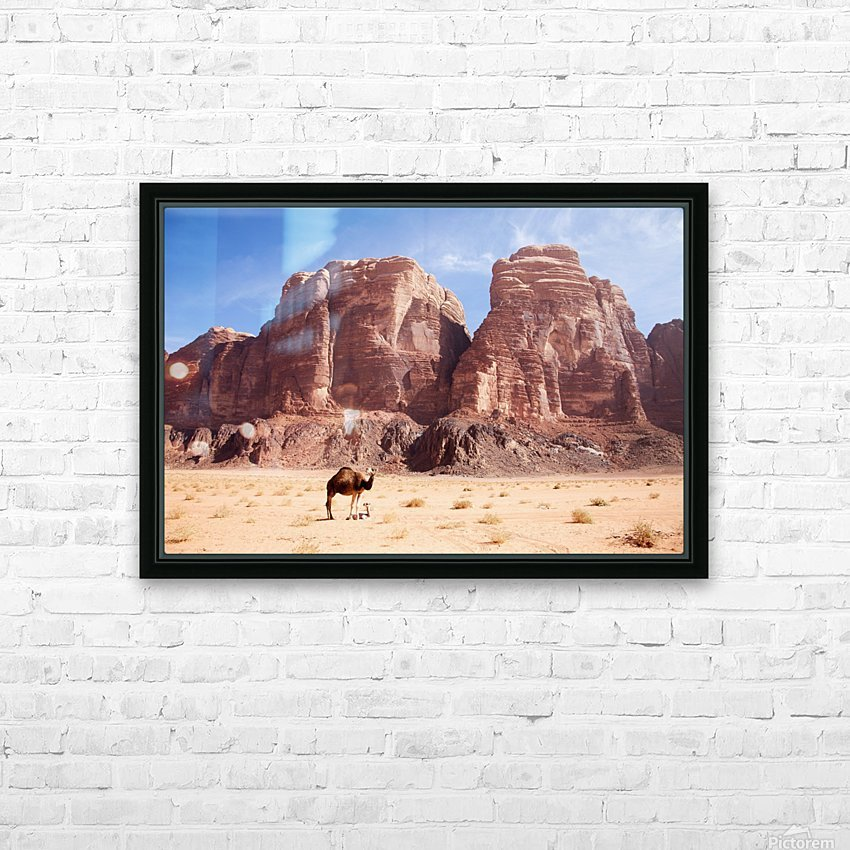 Baby camel and mother; Wadi Rum, Jordan HD Sublimation Metal print with Decorating Float Frame (BOX)