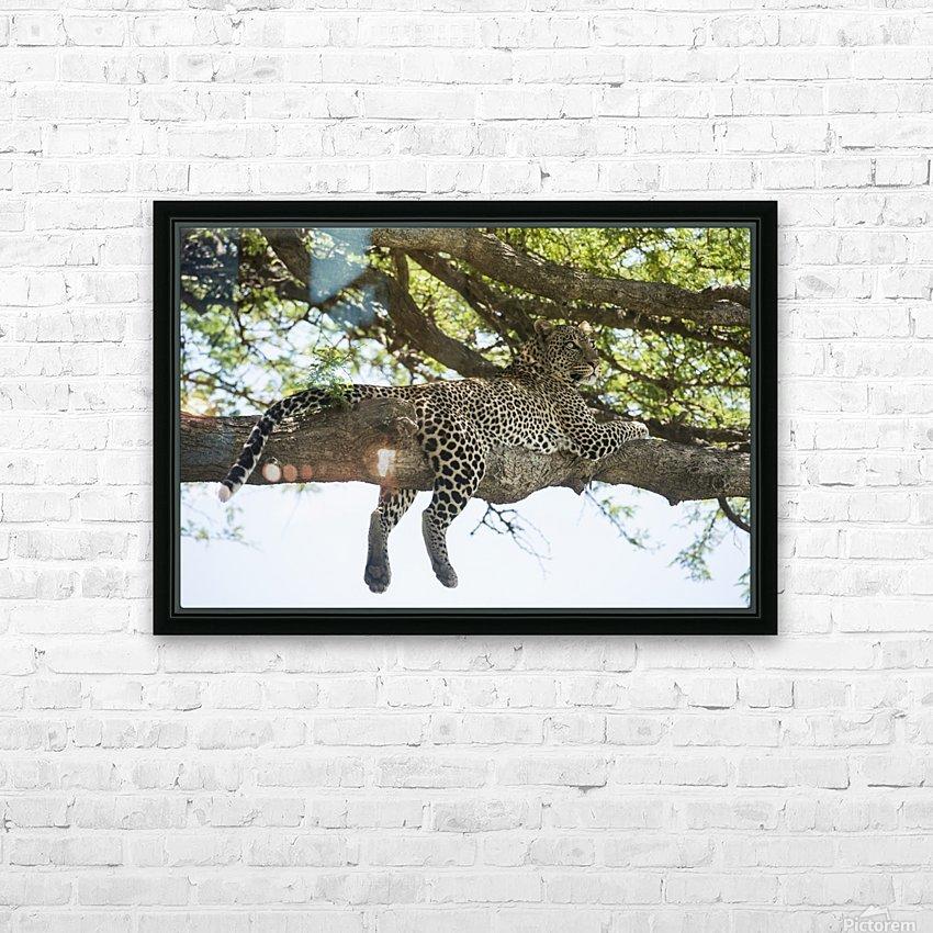 Leopard sprawled on tree limb near Ndutu, Ngorongoro Crater Conservation Area; Tanzania HD Sublimation Metal print with Decorating Float Frame (BOX)