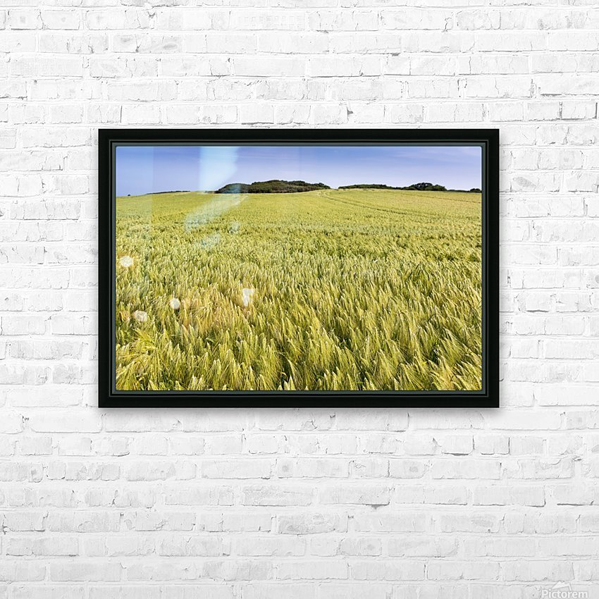 Wide angle image of a barley field with blue sky; Brittany, France HD Sublimation Metal print with Decorating Float Frame (BOX)