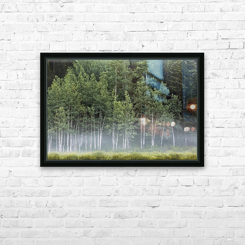 Fog covering a row of aspen trees in the early morning; Kananaskis Country, Alberta, Canada HD Sublimation Metal print with Decorating Float Frame (BOX)
