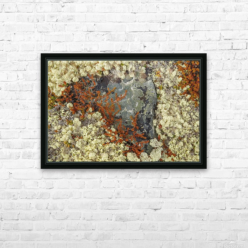 Caribou Moss and lichen grow abundatly in the tundra along the Dempster Highway, northern Yukon; Yukon, Canada HD Sublimation Metal print with Decorating Float Frame (BOX)
