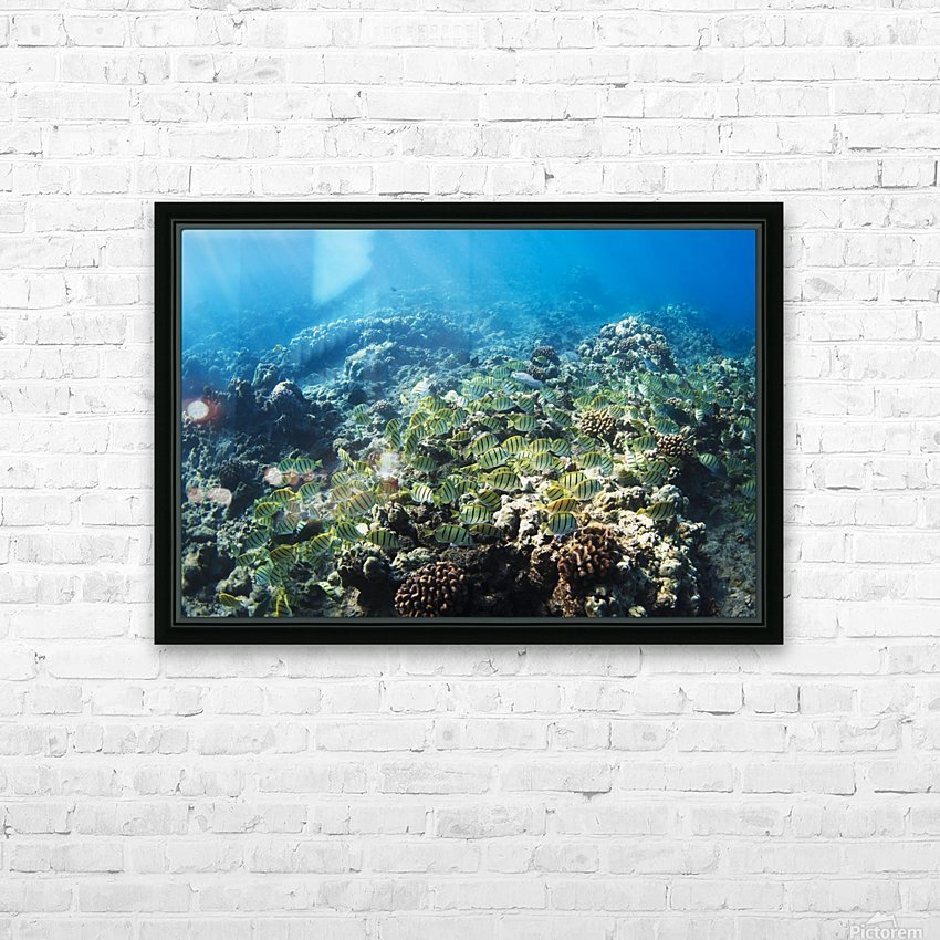 Tropical Reef in Hawaii- HD Sublimation Metal print with Decorating Float Frame (BOX)
