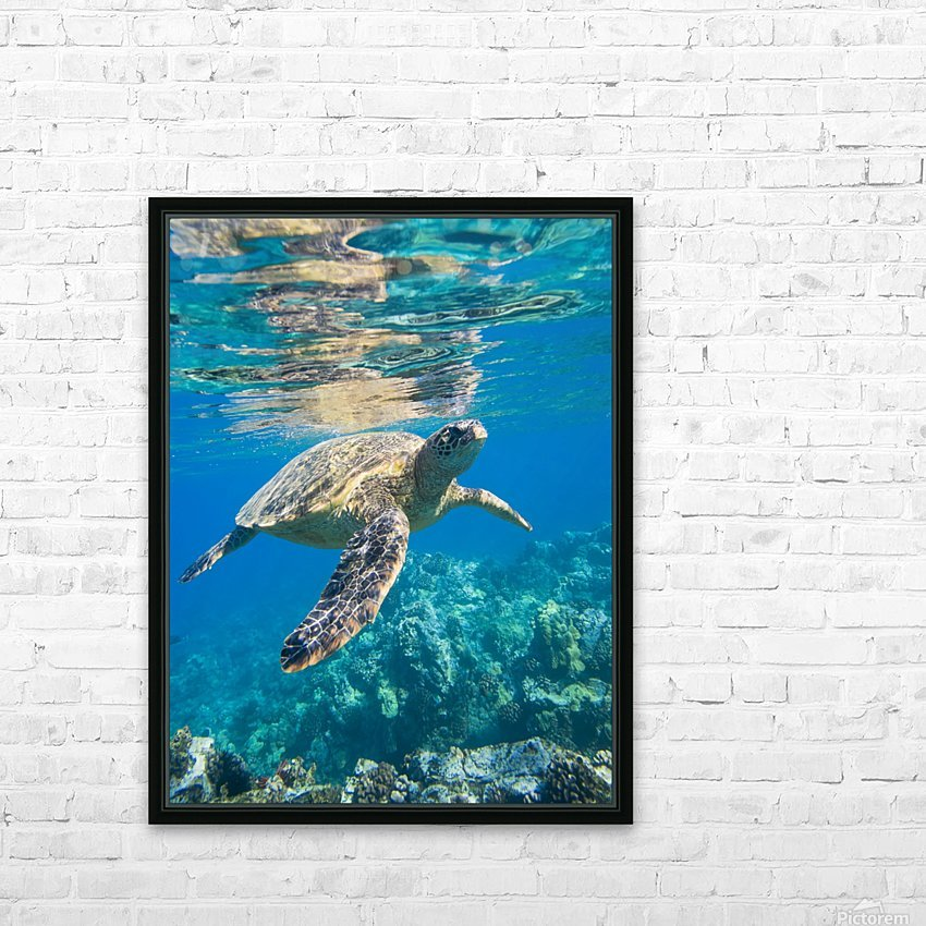 green sea turtle swimming in ocean sea HD Sublimation Metal print with Decorating Float Frame (BOX)