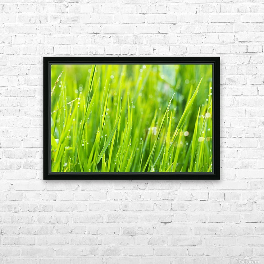 Close up of fresh grass with water drops in the early morning HD Sublimation Metal print with Decorating Float Frame (BOX)