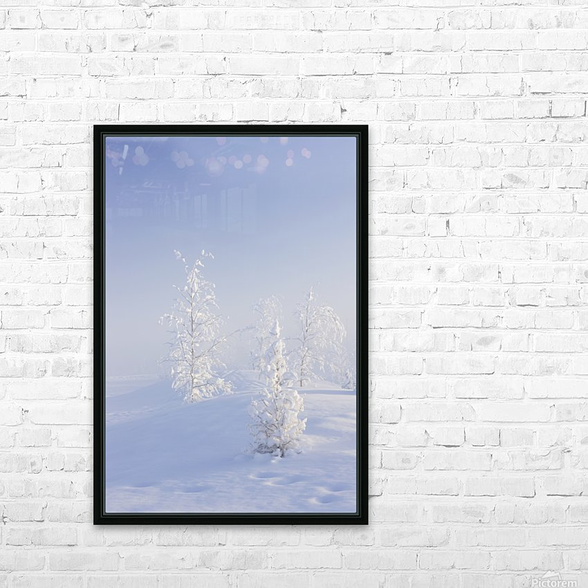 Scenic view of Birch trees in fog at sunrise, North Pole, Interior Alaska, Winter HD Sublimation Metal print with Decorating Float Frame (BOX)