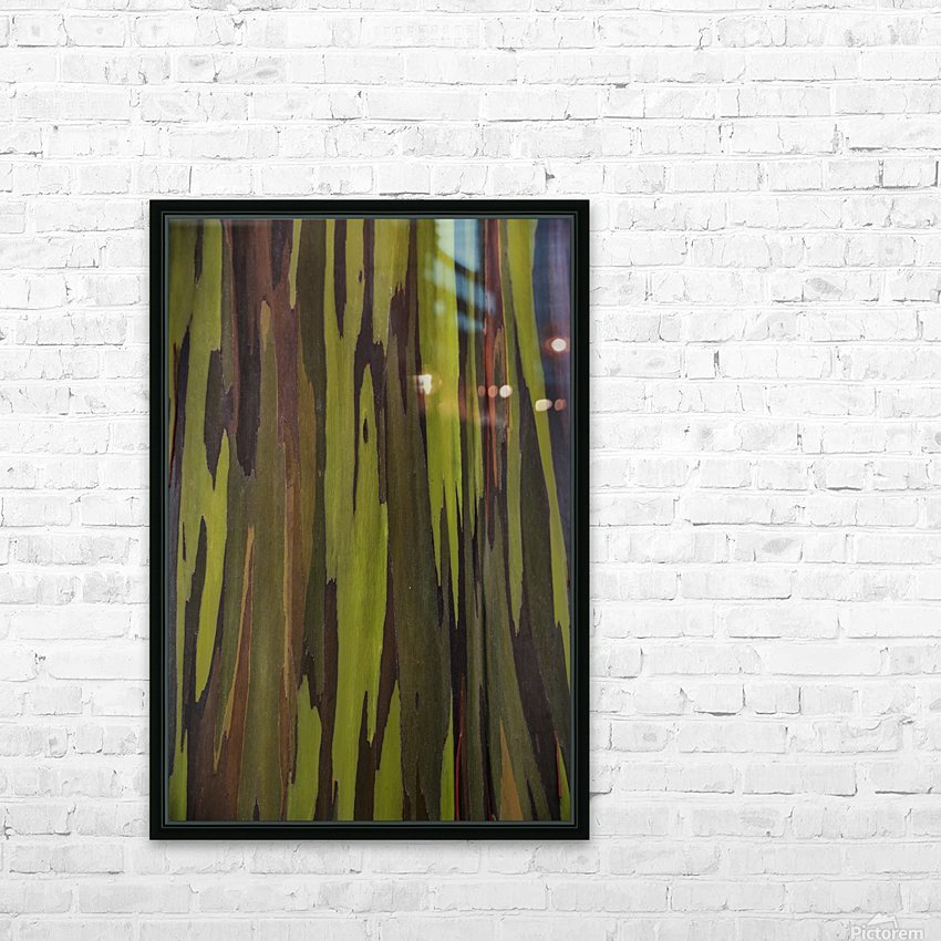 Bark of the Rainbow Eucalyptus (Eucalyptus deglupta); Hawaii, United States of America HD Sublimation Metal print with Decorating Float Frame (BOX)