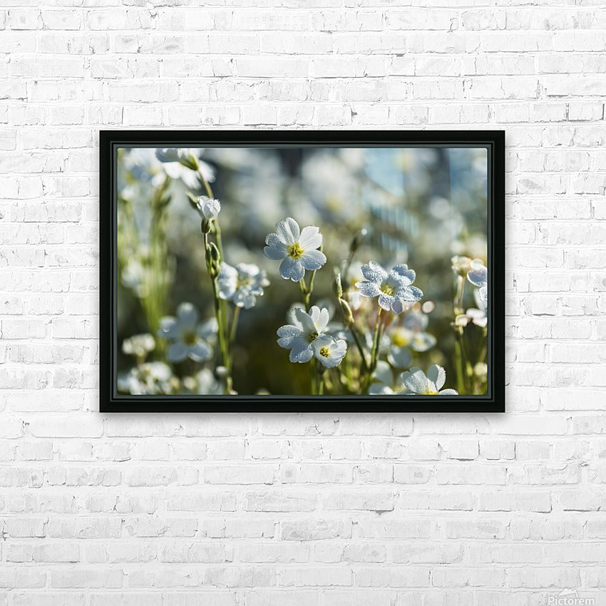 Chickweed (Stellaria media) blooms profusely in the spring; Astoria, Oregon, United States of America HD Sublimation Metal print with Decorating Float Frame (BOX)