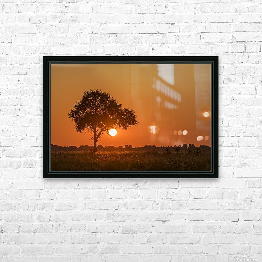 Backlit grass and silhouetted tree at sunset; Botswana HD Sublimation Metal print with Decorating Float Frame (BOX)