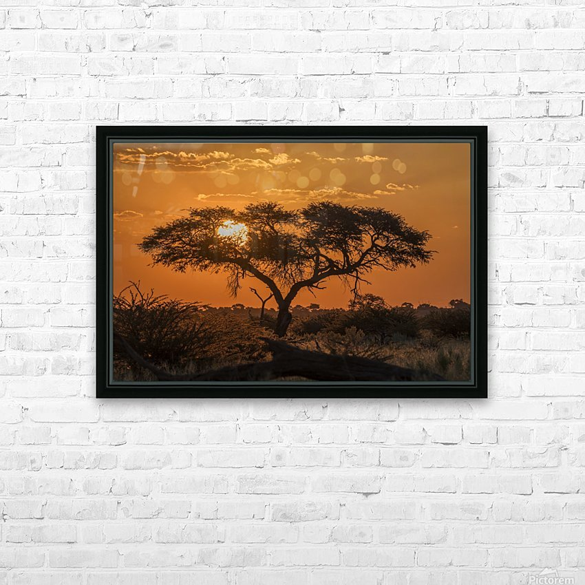 Silhouette of acacia tree at orange sunset; Botswana HD Sublimation Metal print with Decorating Float Frame (BOX)