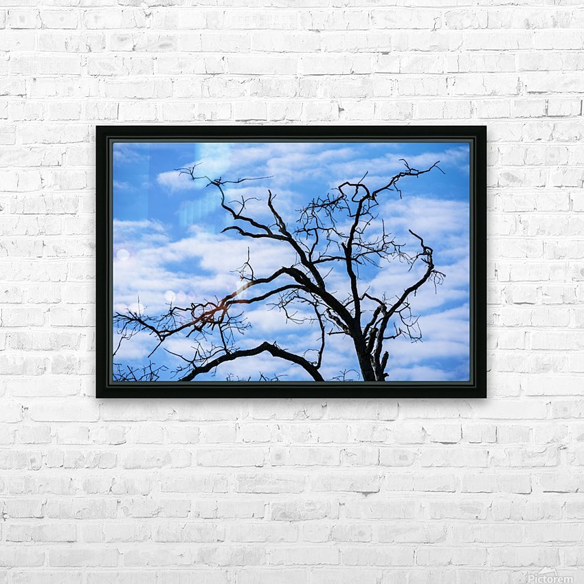 A dead tree is silhouetted against the sky; Tahlequah, Oklahoma, United States of America HD Sublimation Metal print with Decorating Float Frame (BOX)