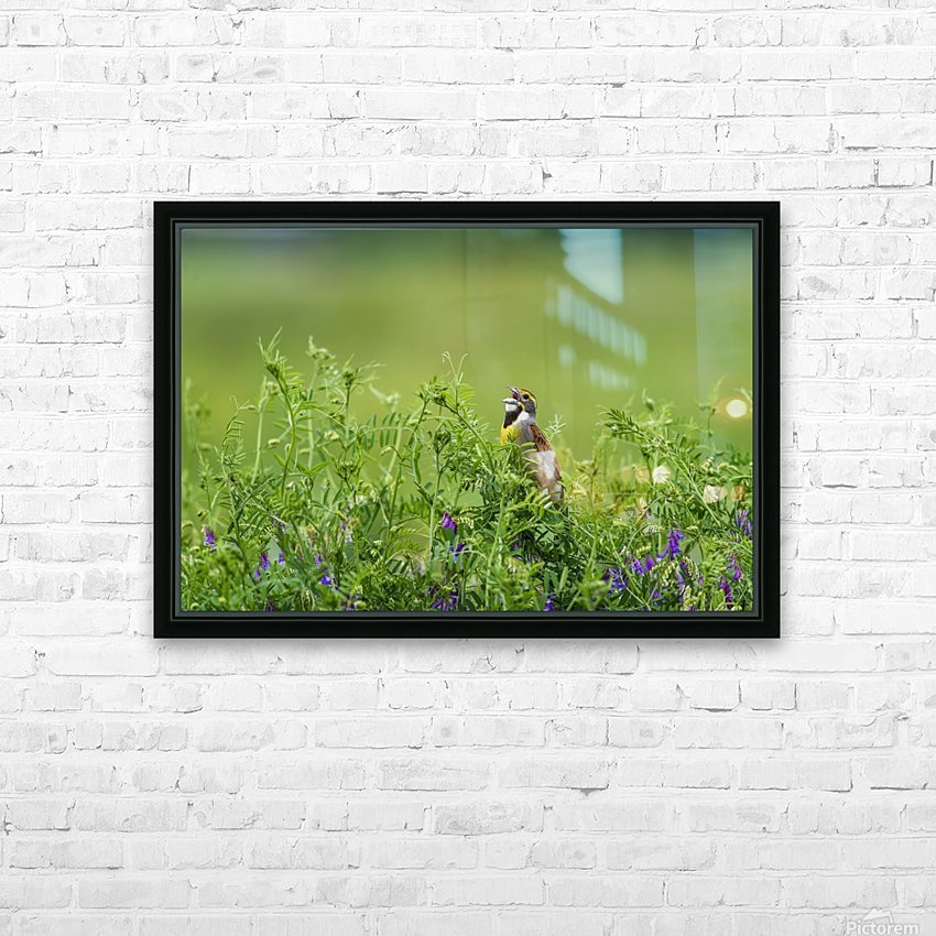 A male Dickcissel (Spiza americana) singing; Vian, Oklahoma, United States of America HD Sublimation Metal print with Decorating Float Frame (BOX)