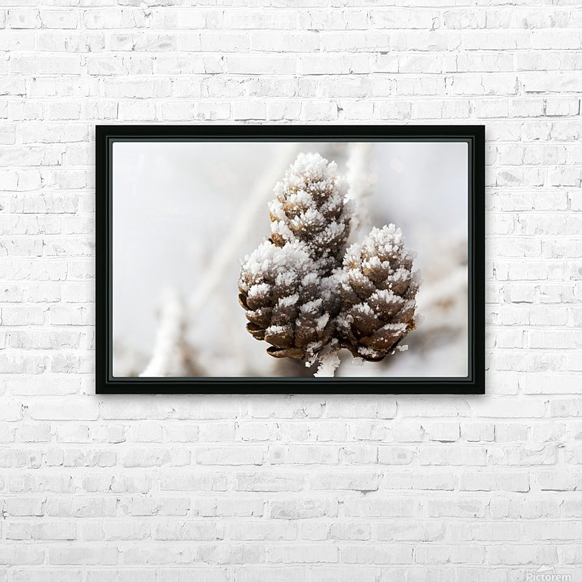 Close up of frosted pine cones; Calgary, Alberta, Canada HD Sublimation Metal print with Decorating Float Frame (BOX)