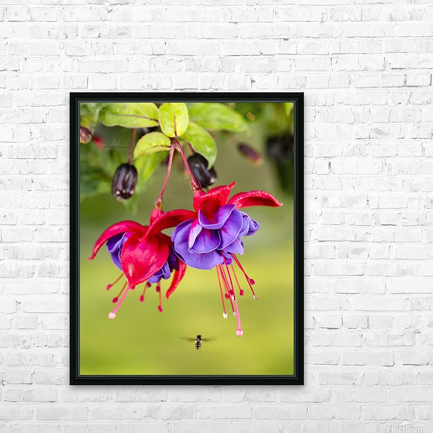 Close up of fuchsia and insect in garden; South-central Alaska; Eagle River, Alaska, United States of America HD Sublimation Metal print with Decorating Float Frame (BOX)