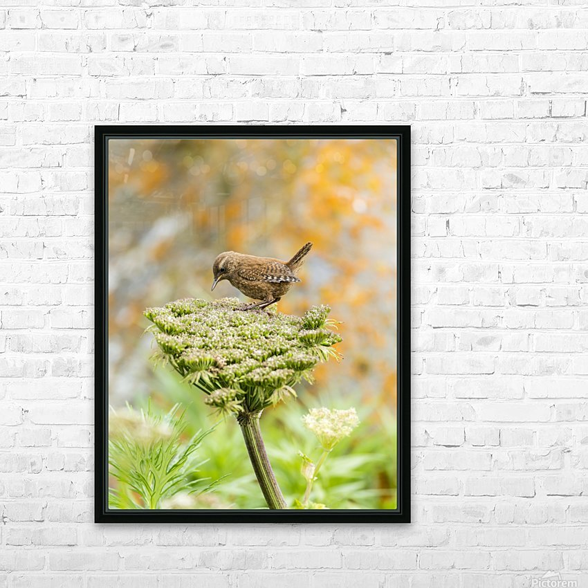 Pacific wren (Troglodytes pacificus) perched on wild celery on St. Paul Island in Southwest Alaska; St. Paul Island, Pribilof Islands, Alaska, United States of America HD Sublimation Metal print with Decorating Float Frame (BOX)