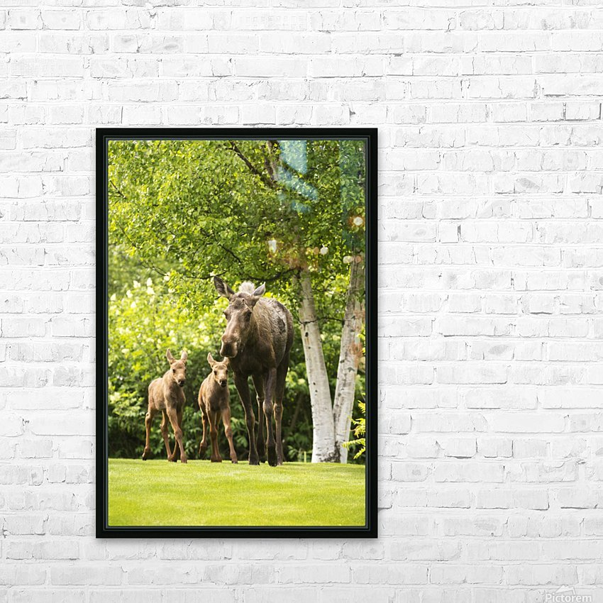 A cow moose (alces alces) with her calves on green grass with lush green foliage; Anchorage, Alaska, United States of America HD Sublimation Metal print with Decorating Float Frame (BOX)