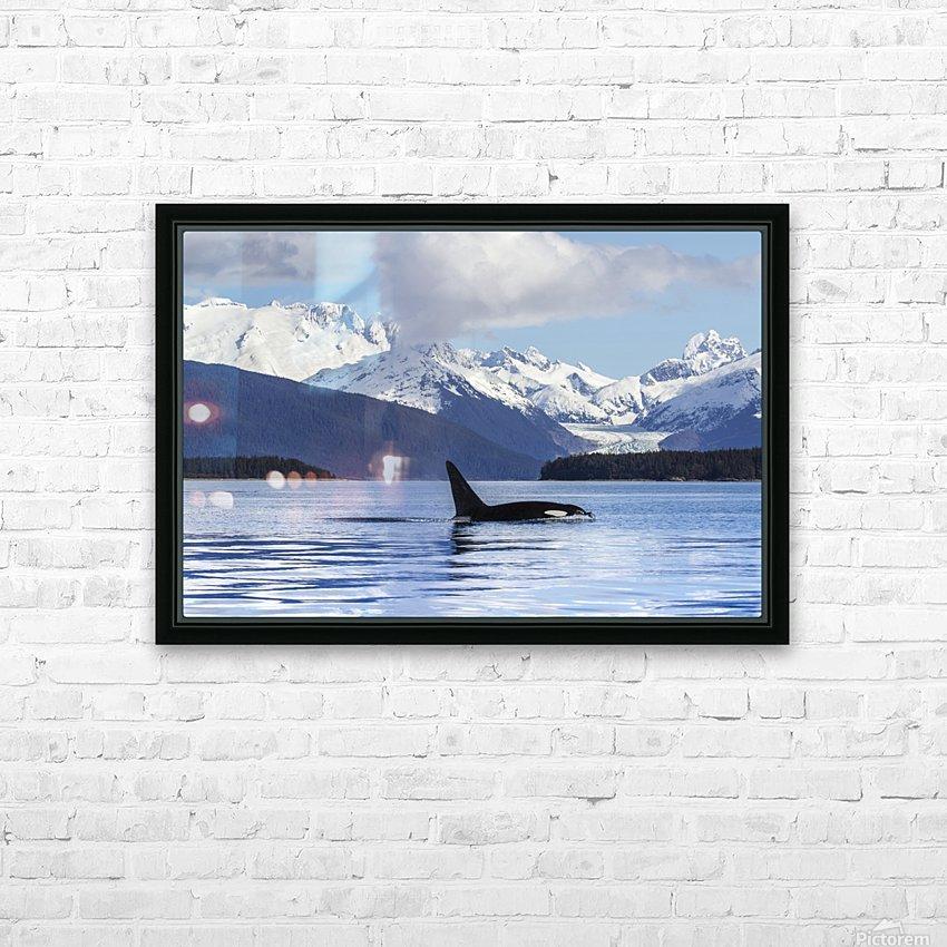 An Orca Whale (Killer Whale) (Orcinus orca) surfaces in Lynn Canal, Herbert Glacier, Inside Passage; Alaska, United States of America HD sublimation métal imprimé avec décoration flotteur cadre (boîte)