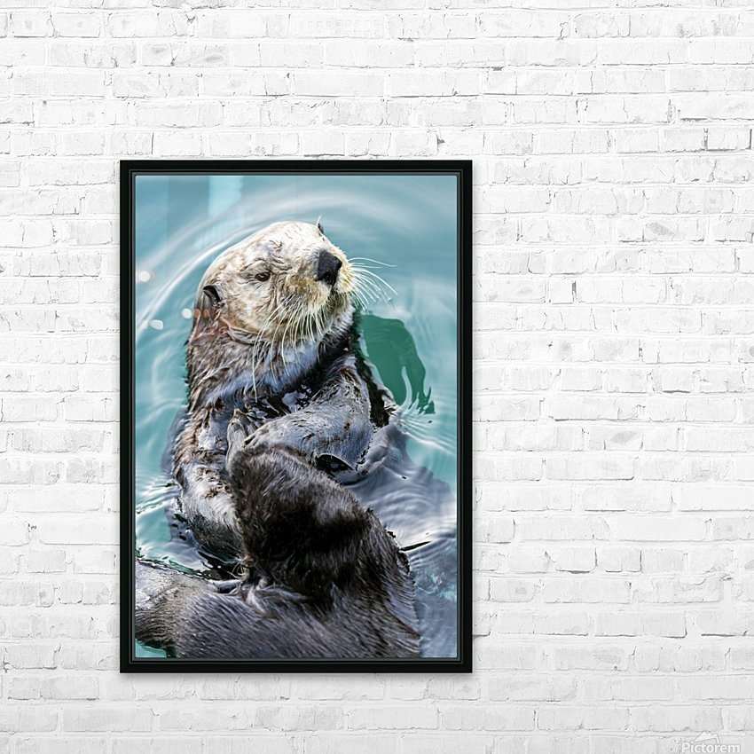 Sea Otter (Enhydra lutris) eating in Seward boat harbour on the Kenai Peninsula in South-central Alaska; Seward, Alaska, United States of America HD Sublimation Metal print with Decorating Float Frame (BOX)