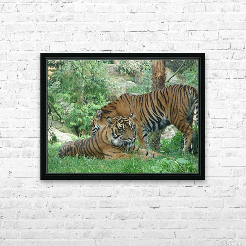 Tigers HD Sublimation Metal print with Decorating Float Frame (BOX)