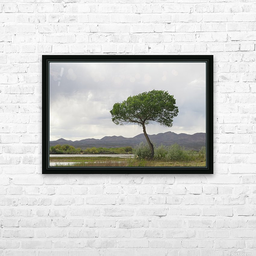 Tree at the Bosque de Apache Wildlife Sanctuary VP1 HD Sublimation Metal print with Decorating Float Frame (BOX)