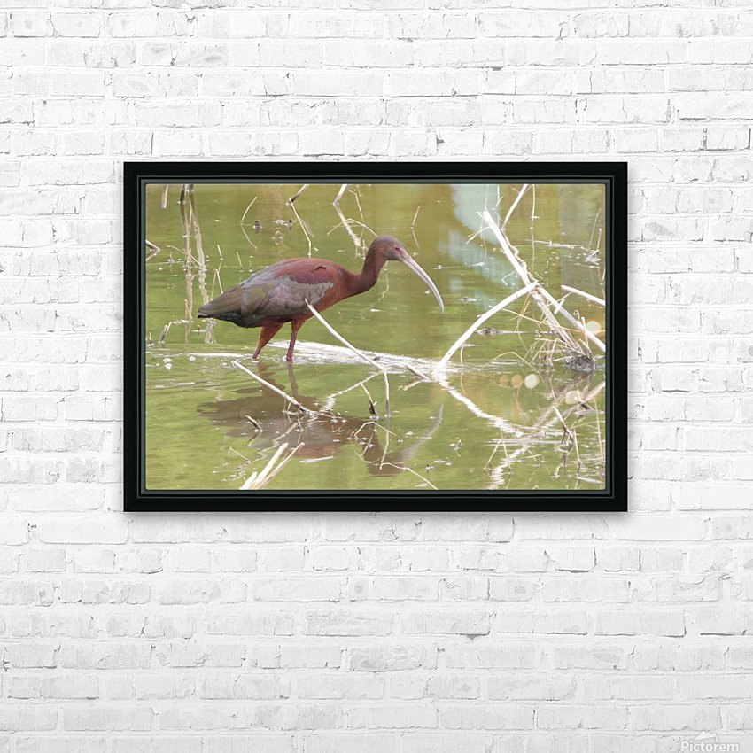 Glossy Ibis VP2 HD Sublimation Metal print with Decorating Float Frame (BOX)