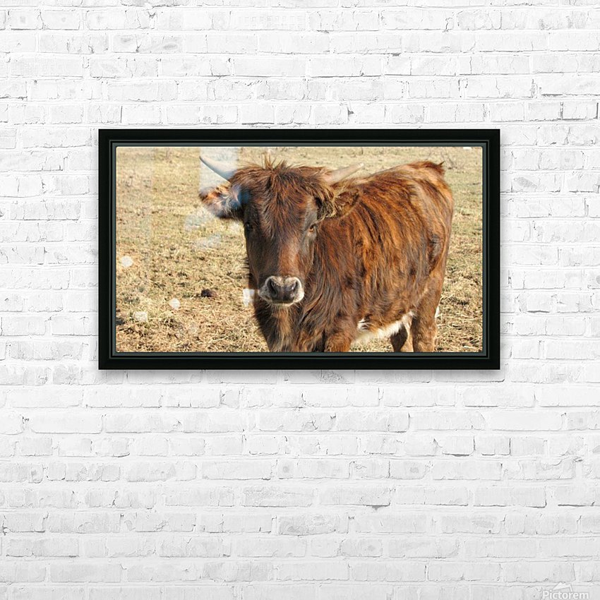 Bull in the Spring VP1 HD Sublimation Metal print with Decorating Float Frame (BOX)