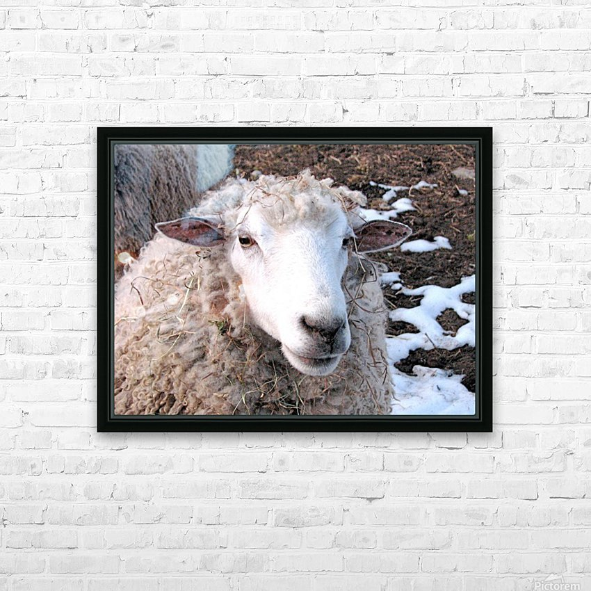Lamb in the Winter VP1 HD Sublimation Metal print with Decorating Float Frame (BOX)