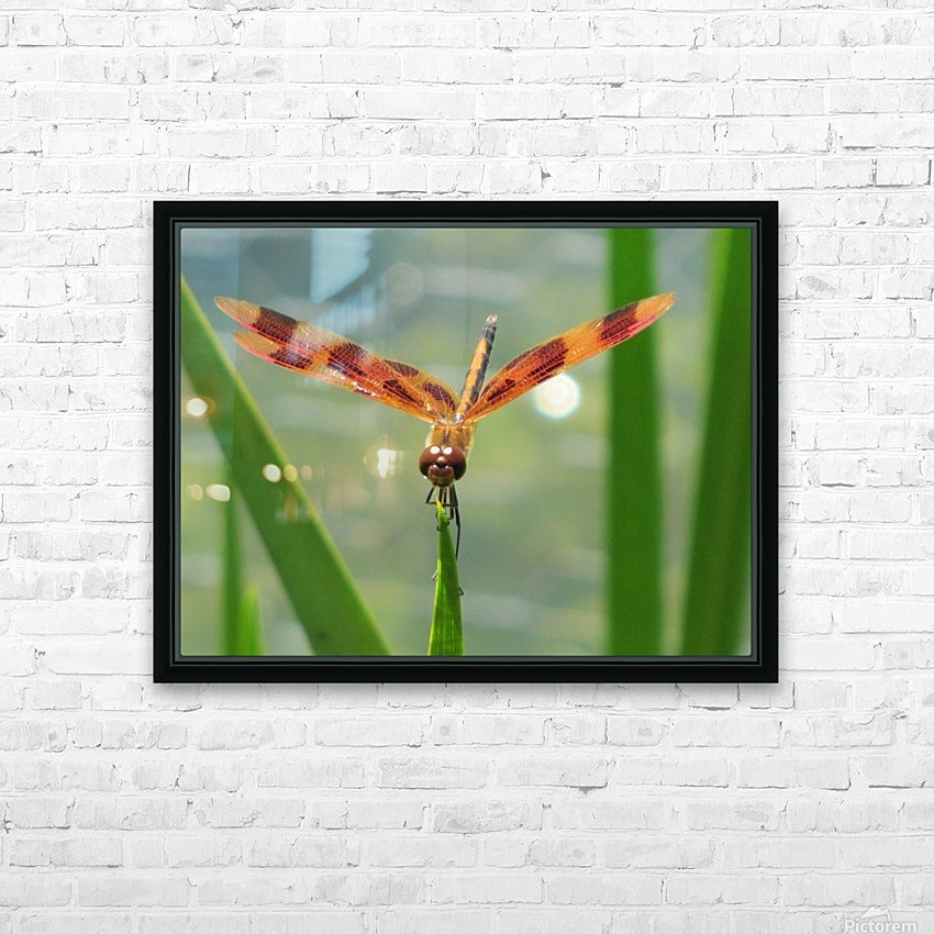 Dragonfly in Lincoln Park VP1 HD Sublimation Metal print with Decorating Float Frame (BOX)