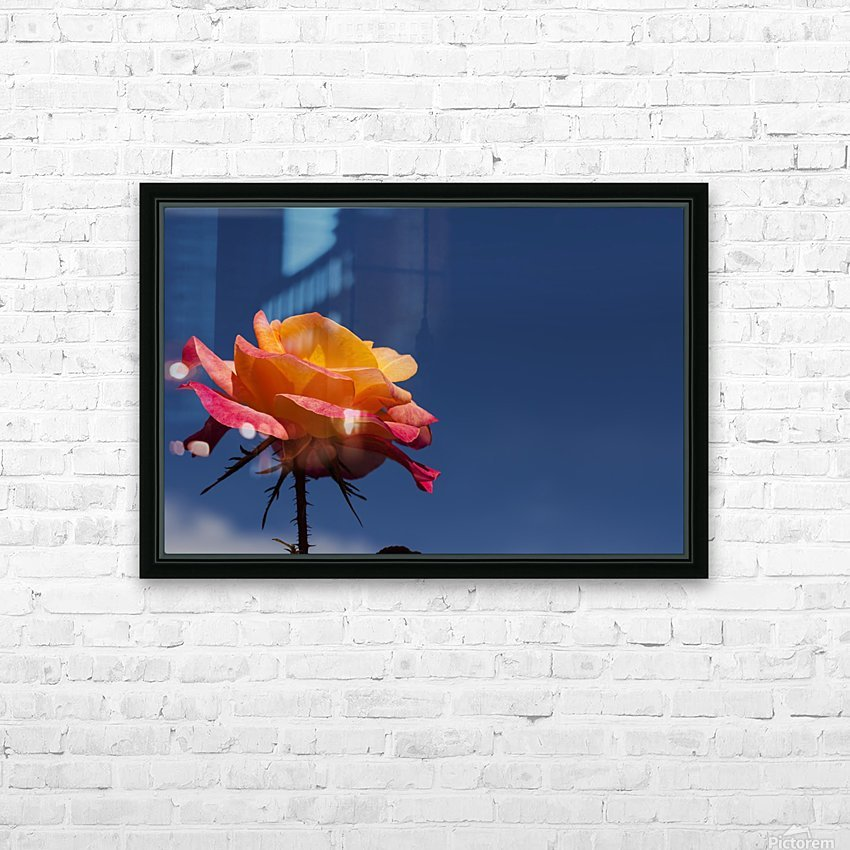 Pink and Orange Rose with Blue Sky HD Sublimation Metal print with Decorating Float Frame (BOX)