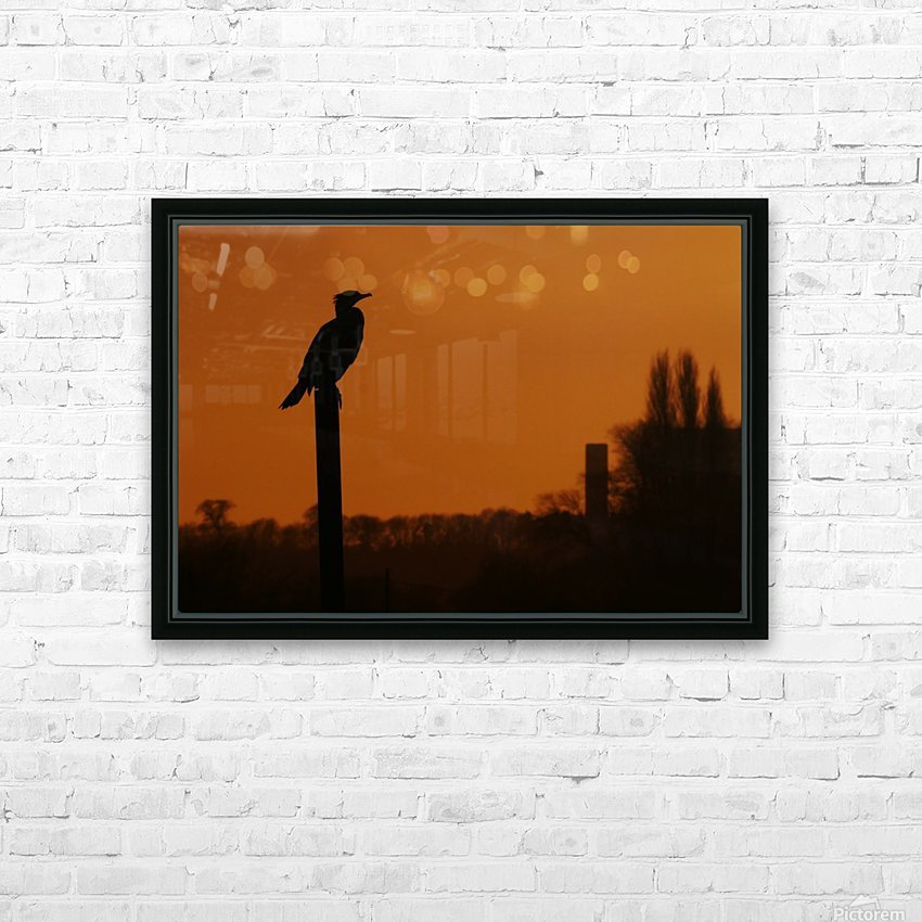 Cormorant perch HD Sublimation Metal print with Decorating Float Frame (BOX)