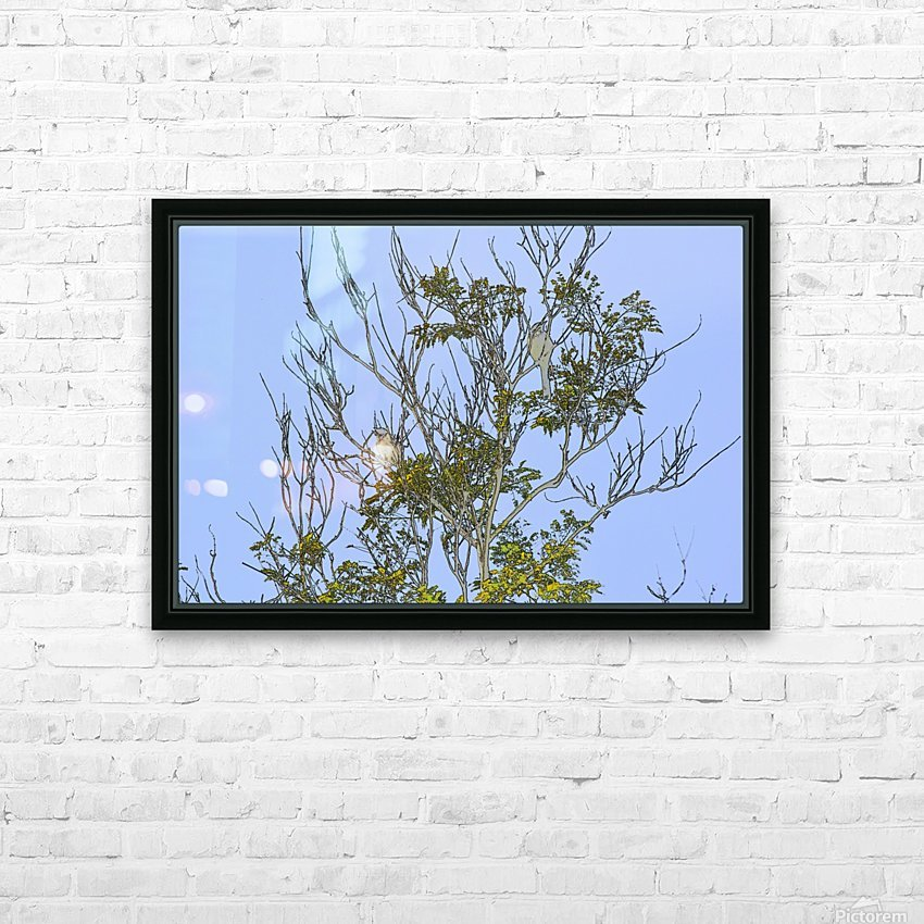 Two Blue Jays in Tree 2 abstract HD Sublimation Metal print with Decorating Float Frame (BOX)