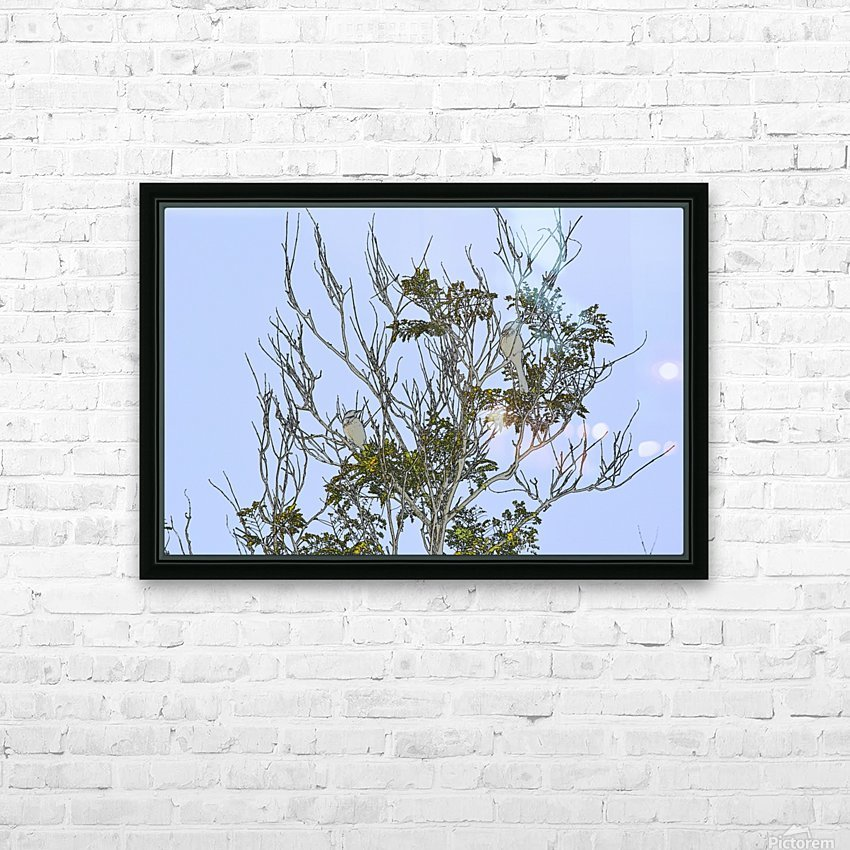 Two Blue Jays in Tree 1 abstract HD Sublimation Metal print with Decorating Float Frame (BOX)