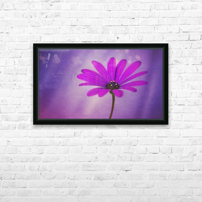 Purple Osteospermum HD Sublimation Metal print with Decorating Float Frame (BOX)